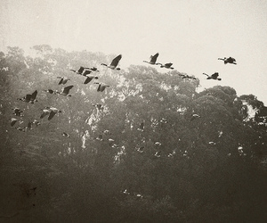 birds, black and white, and photography image