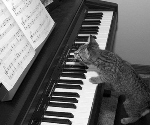cat, piano, and music image