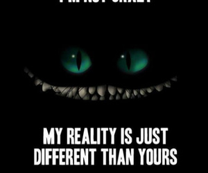 crazy, reality, and cat image