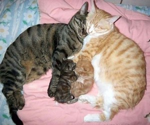 cats, family, and Gatos image