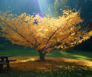 tree, nature, and yellow image