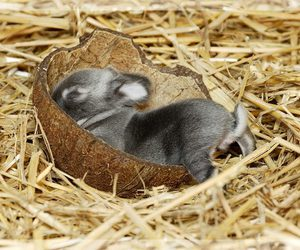 baby, bowl, and bunnies image
