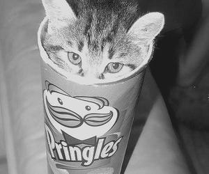 cat, pringles, and animal image