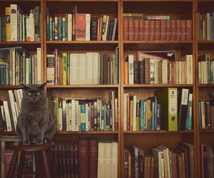 books and cute cat image