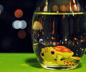 turtle, water, and finding nemo image