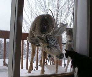 cat, deer, and animal image