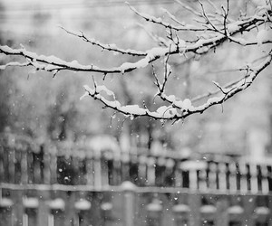 black and white, fence, and branches image