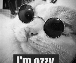 cat, ozzy, and funny image