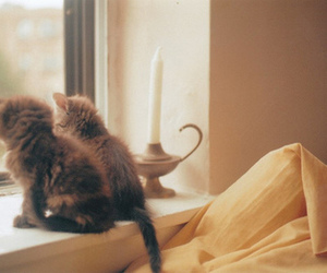cat, kittens, and vintage image
