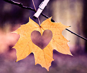 love, heart, and autumn image