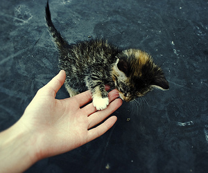 adorable, hand, and kitten image
