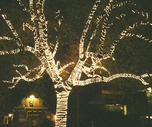 light, tree, and vintage image