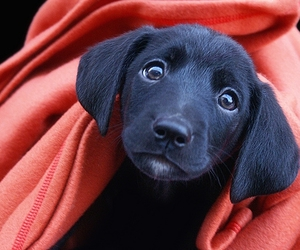 baby, pretty, and puppy image