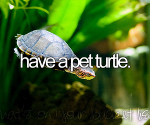 before i die, pet, and turtle image