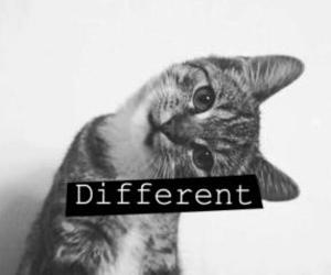 cat, different, and black and white image
