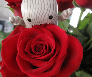 domo, red, and rose image