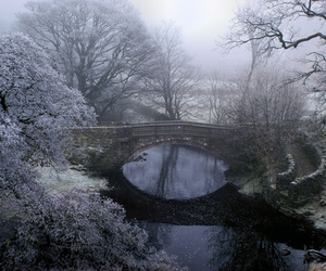 winter, nature, and bridge image