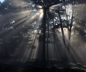 energy, forest, and light image