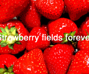 strawberry and strawberry fields forever image