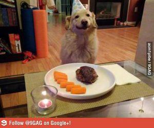 9gag, dog, and awsome image