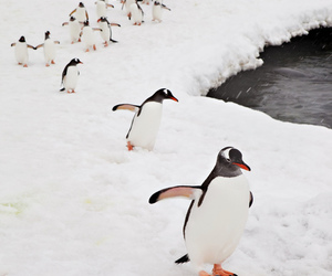penguin, animal, and ice image