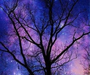 tree, sky, and stars image
