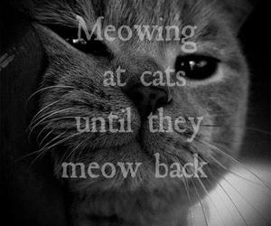 cat and meow at cat image