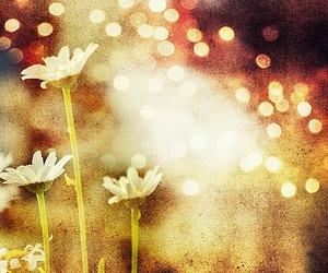 flower, light, and poetic image