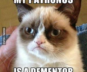 cat, funny, and harry potter image
