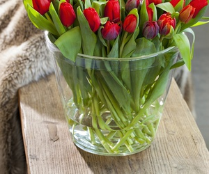tulips, flowers, and red image