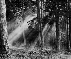 forest, light, and black and white image