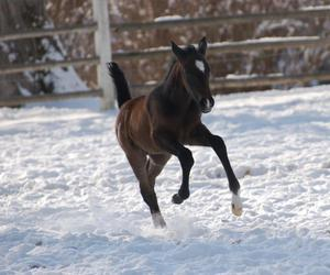 baby, horse, and snow image
