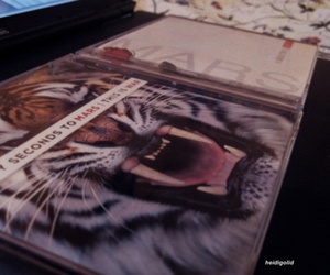30 seconds to mars, tiger, and a beautiful lie image