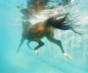 horse, water, and swim image