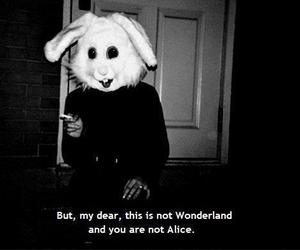 alice, all, and fuck image