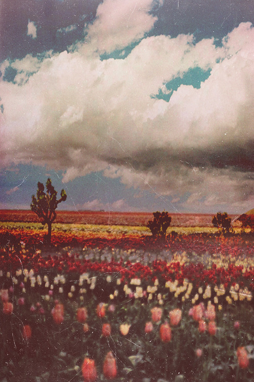 flowers, vintage, and sky image