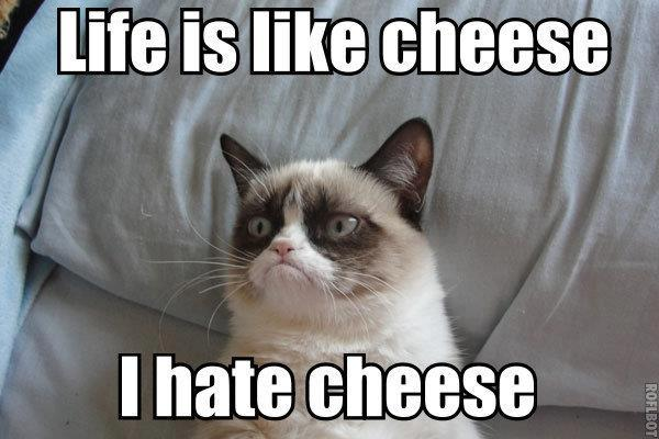 cat, cheese, and funny image
