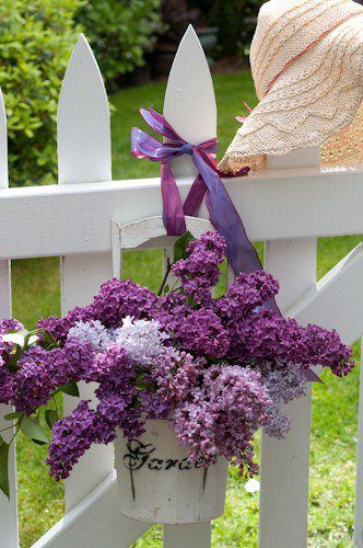 flowers, outdoor, and purple image
