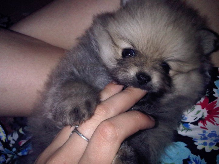fluffy, puppy, and cute image