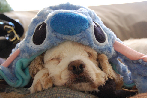 dog, cute, and stitch image