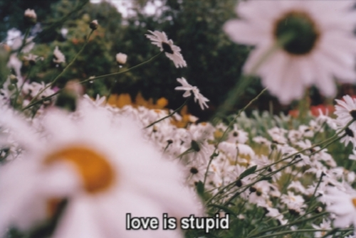 love, flowers, and stupid image