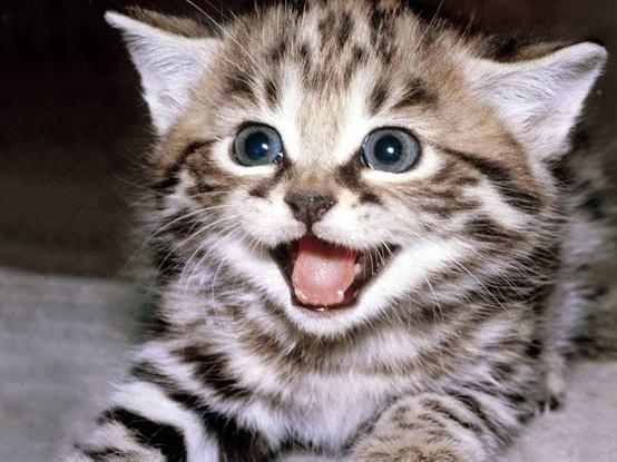 cat, kitten, and animal image