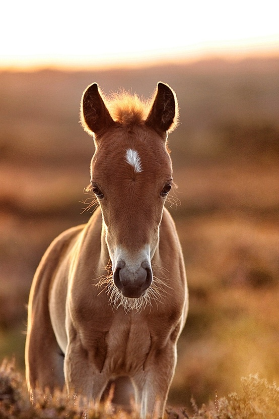 horse, animal, and foal image