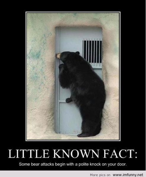 funny and bear image