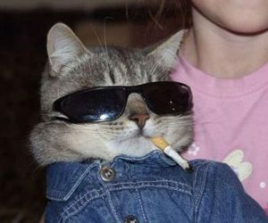 cat, cigarette, and funny image