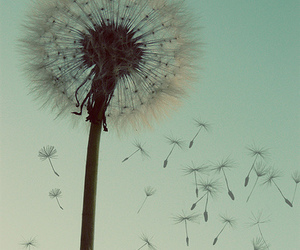 flowers, dandelion, and sky image