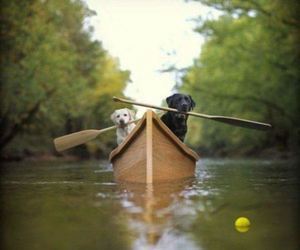 dog, animal, and boat image
