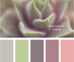 color, succulent, and tones image