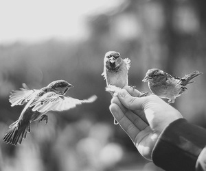 bird, photography, and hand image