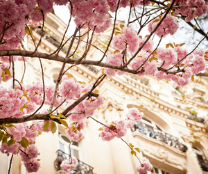 beleza, tree, and blossoms pink image